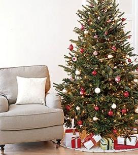 1204_holidays_trees_350