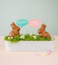Conversation bunnies