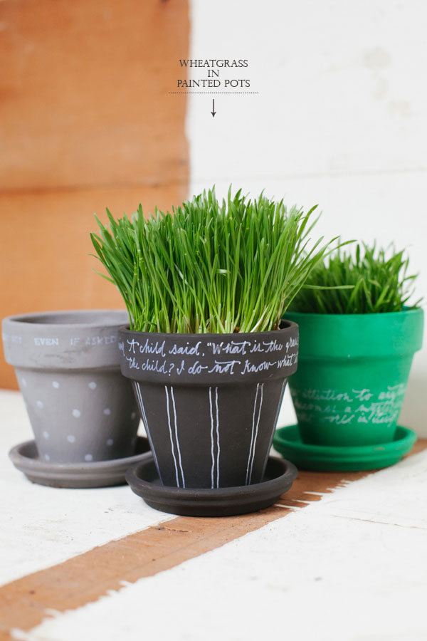 Wheatgrass In Painted Pots Diy